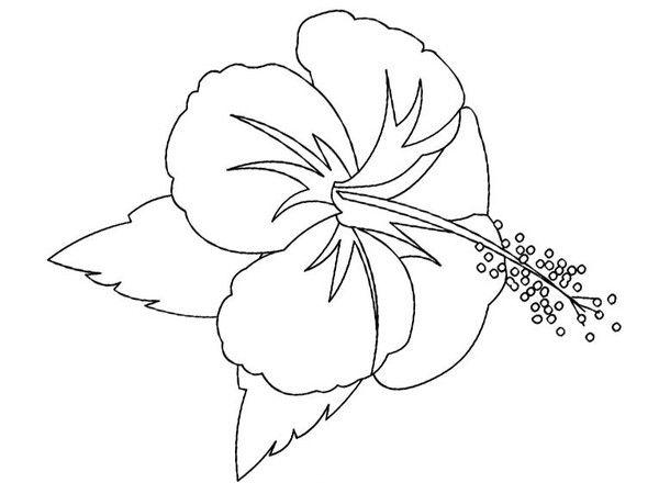 Coloriages fleurs hibiscus - Fleur d hibiscus dessin ...