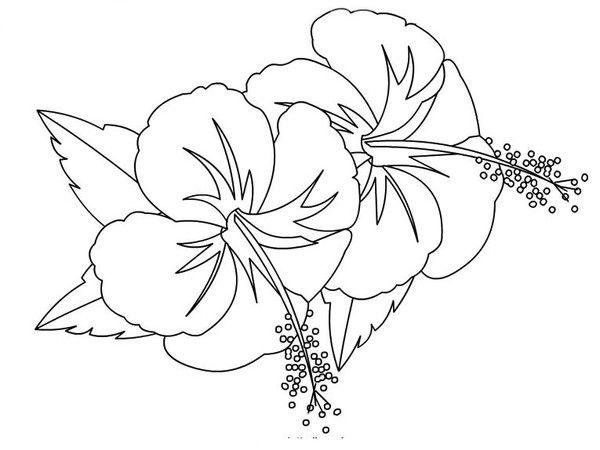 Coloriages fleurs hibiscus - Dessin d hibiscus ...
